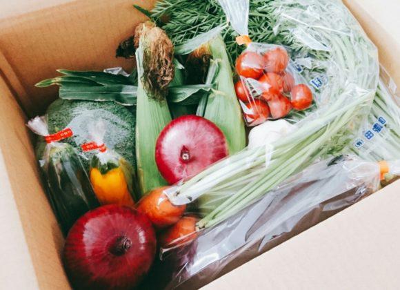 今週発送♪ 美味しいしまばら野菜をご紹介☆彡