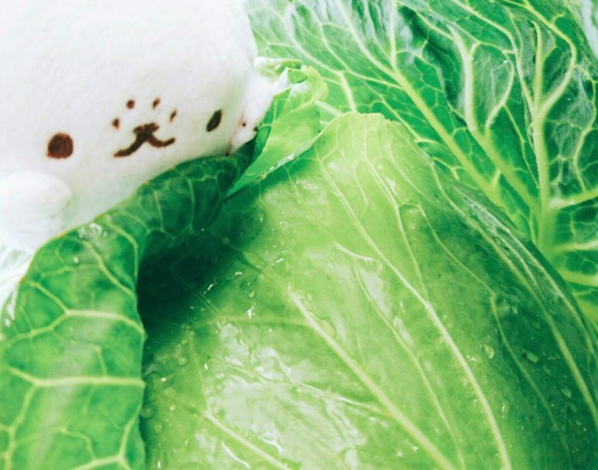 6月21日発送♪美味しいしまばら野菜をご紹介☆彡