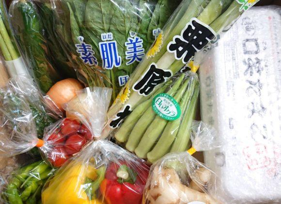 今週のしまばら野菜☆彡